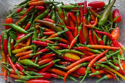 final-chilli-crop-2019
